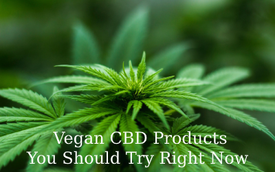 The 11 Best Vegan CBD Products You Should Try Right Now
