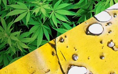 Why Hemp Flower Is Better Than Concentrates
