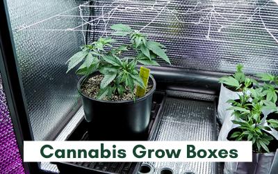 Cannabis Grow Boxes